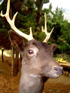 deer-1513660